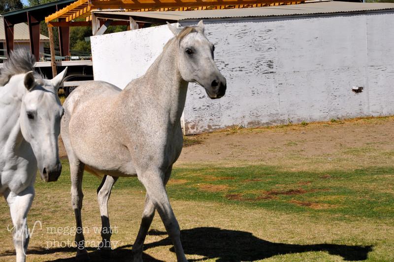 EB&Horses-071.jpg