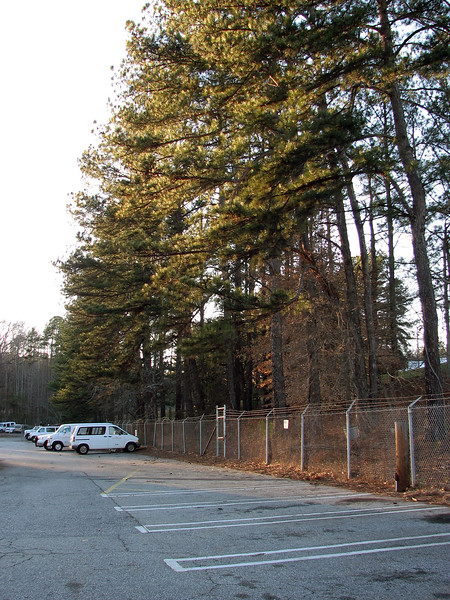 January 24:  Beginning the tree project .  .  .