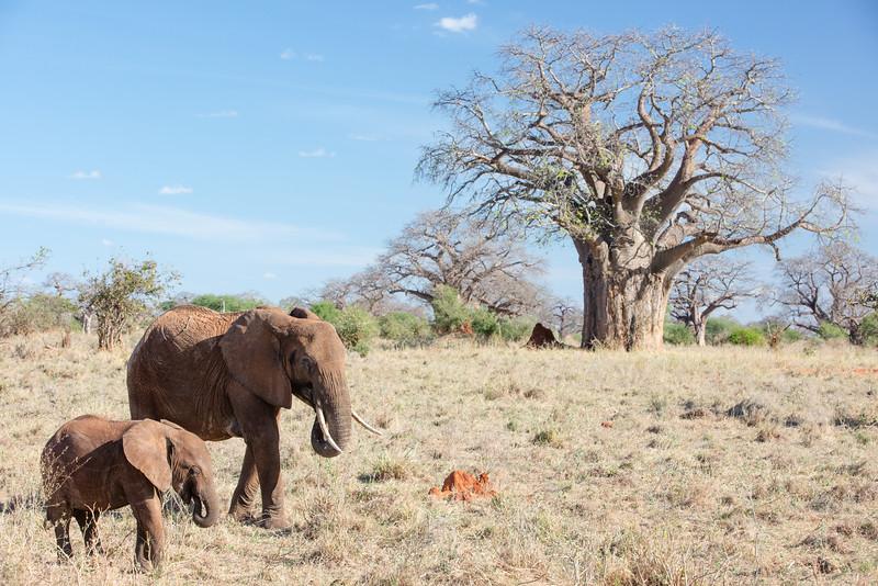 Africa - 102016 - 7960.jpg