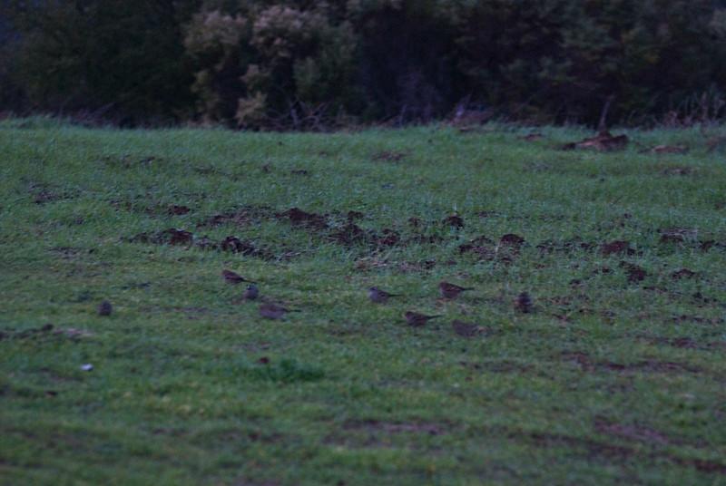 Little birdies on the ground