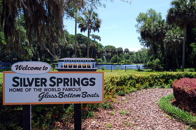 141: 2014 Silver Springs in Ocala and Zoo in Sanford, Florida