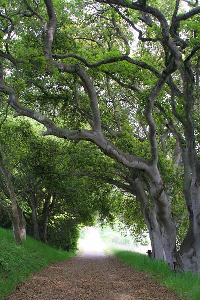 4523 Walk under Trees.jpg
