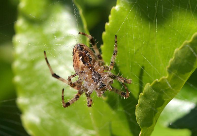 1674 Spider.jpg