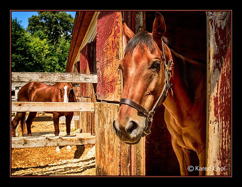 2 horses at the barn sm.jpg