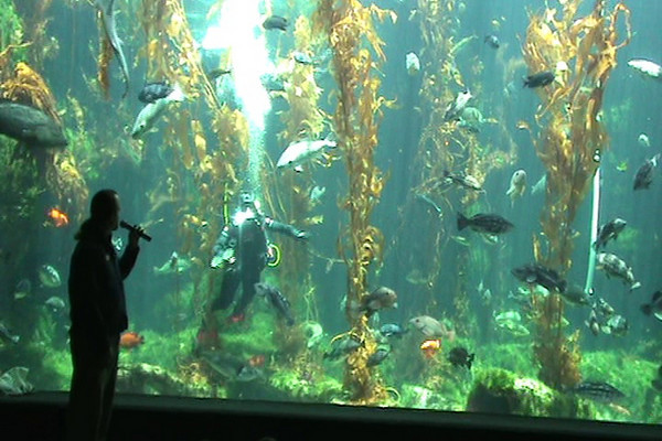 Birch Aquarium dive