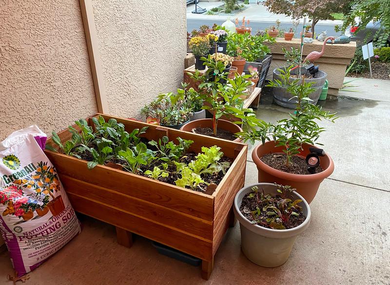 patio garden.jpg