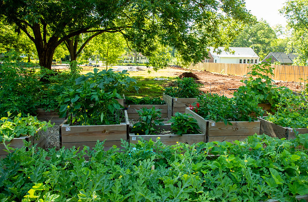Browns Mill Food Forest (Parks with Purpose)