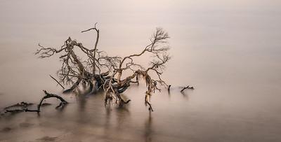 Anne Ramus - Bellarine Driftwood