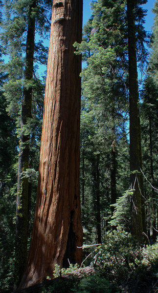 Sequoia and Kings Canoyon National Parks (July 2007)