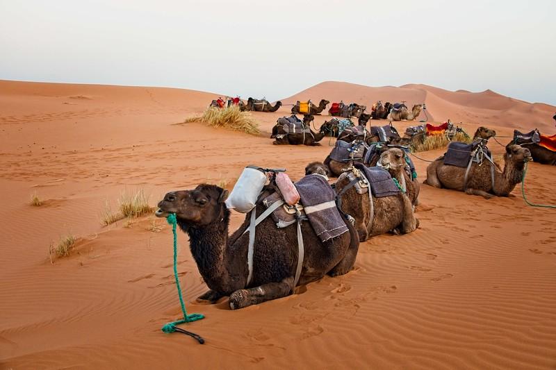 sahara desert morocco 2018 copy1.jpg