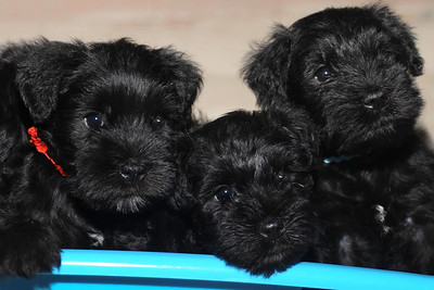 Louise's 2010 pups
