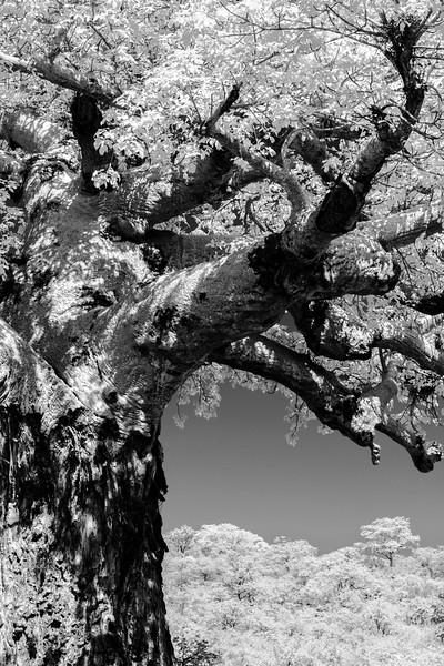A Tree, Shadowed