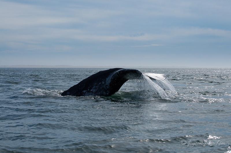 Mexico-Loreto-Whale-2486.jpg