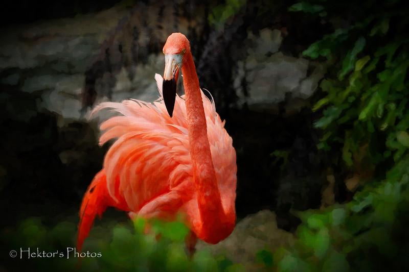 Los Angeles Zoo_5.jpg