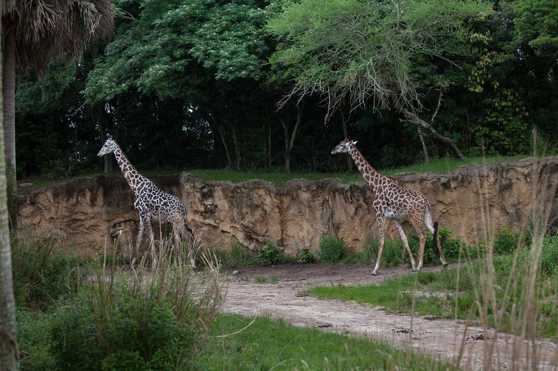 Wild Africa Treck