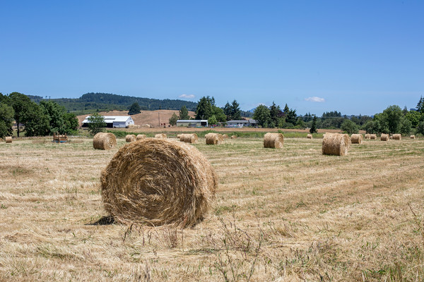 Rolled hay.