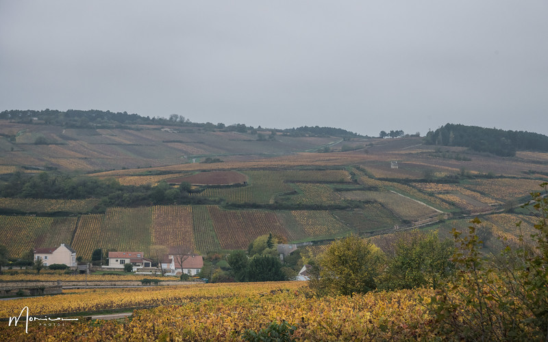 2019-10 - Burgundy Vacation-2730_edit.jpg