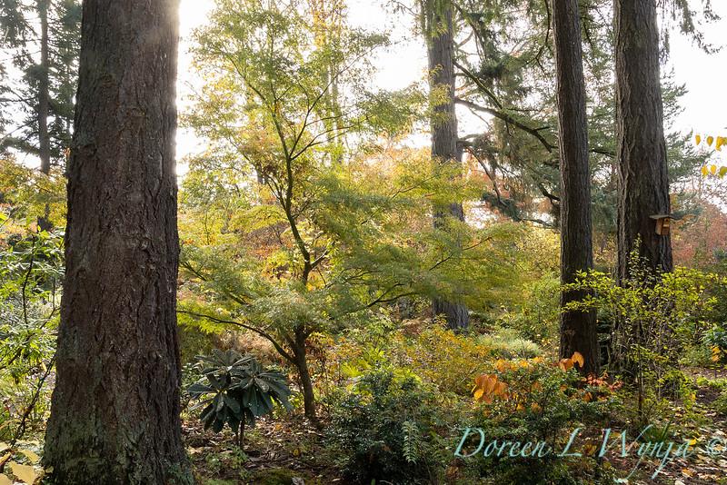 Dietrick fall garden_2115.jpg