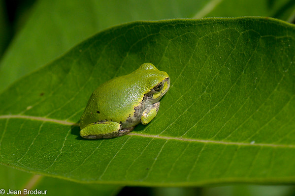 Amphibiens, Reptiles et Mollusques du Quebec