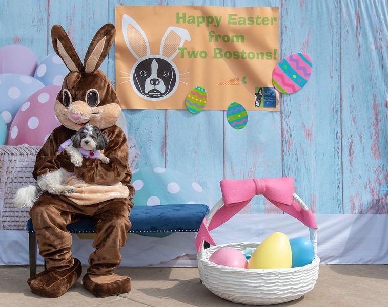 Easter2019TwoBostons-8250.jpg