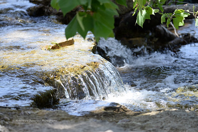 Joshua Springs Park & Preserve
