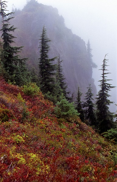 18-Long mountain washington fog tree.jpg