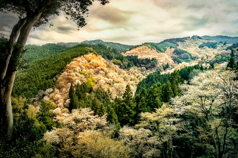 Valley-of-Blossom-2.jpg