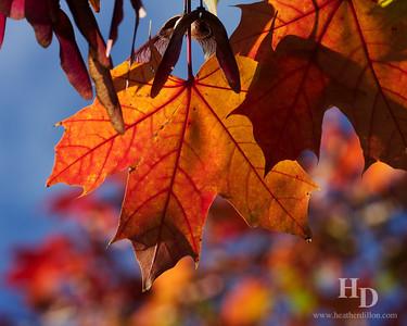 2010-10 Leaves