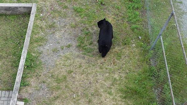 Bear at the Track'15