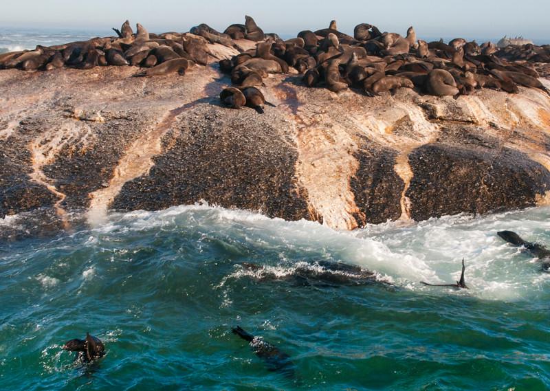 Seal Island-2.jpg