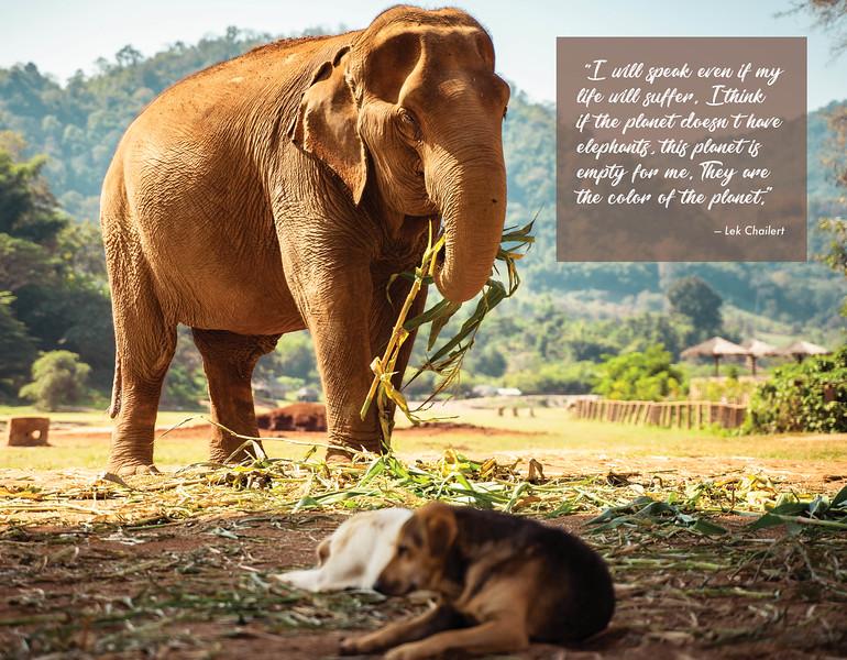elephant magazine final_WEB10.jpg