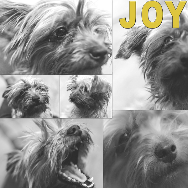 Joy Comp.jpg