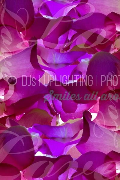 Rose-Petals-Love_batch_batch.jpg