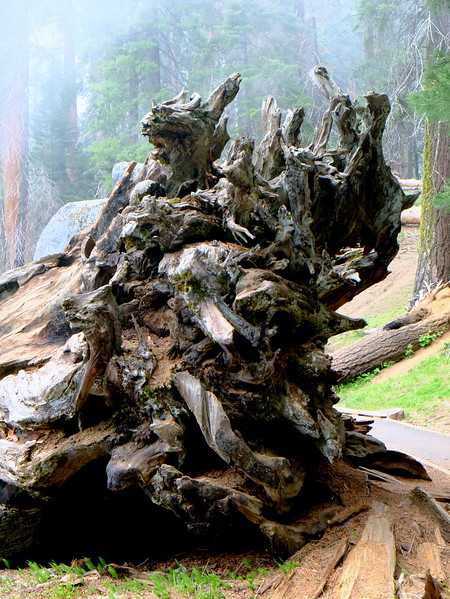 California Day 6 Sequoia 05-30-2017 101.JPG
