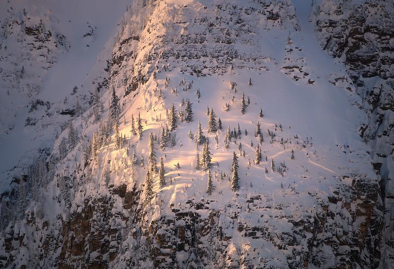 Trees On A Mountain 2