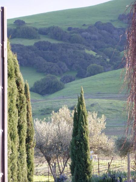 Sonoma Hills From Viansa