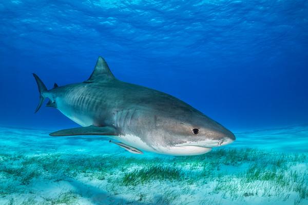 Bahamas - onboard the Shearwater