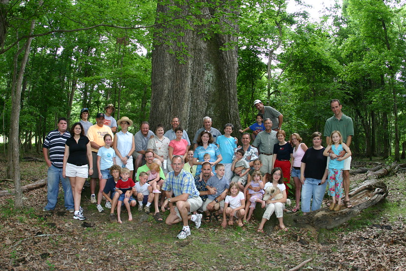 5/15/2004 Largest Red Oak in The USA