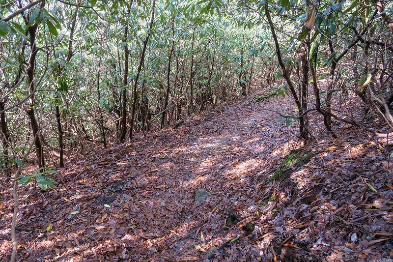 Appalachian Trail -- 3,130'