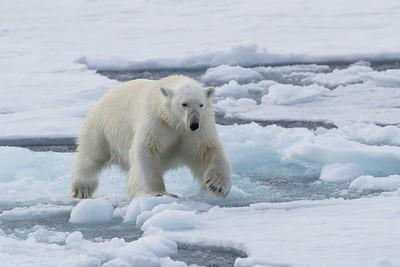 Svalbard part 2 2016