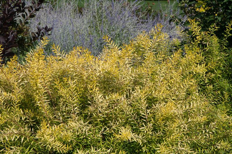 2009 09 06_White Flower Farm_0131.jpg