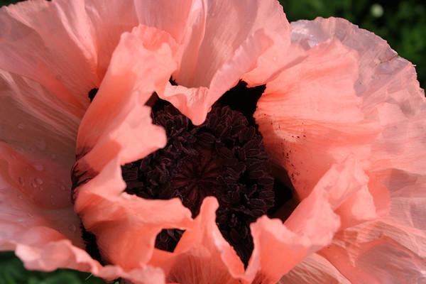 Flowers_060510_0016.JPG