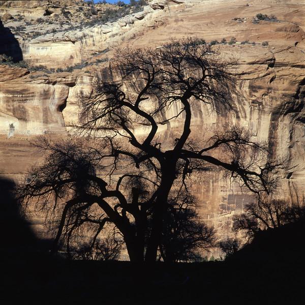 Tree Silhoutte.jpg