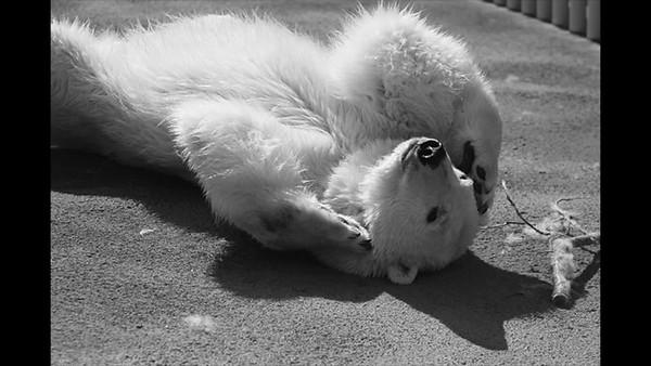 ALASKA ZOO ANIMALS