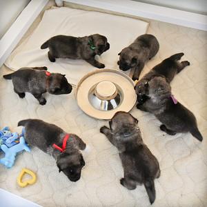 2014-03-13 Wed. pups @ 2.5 weeks old