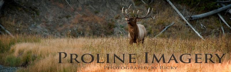Proline Blog Banner.jpg