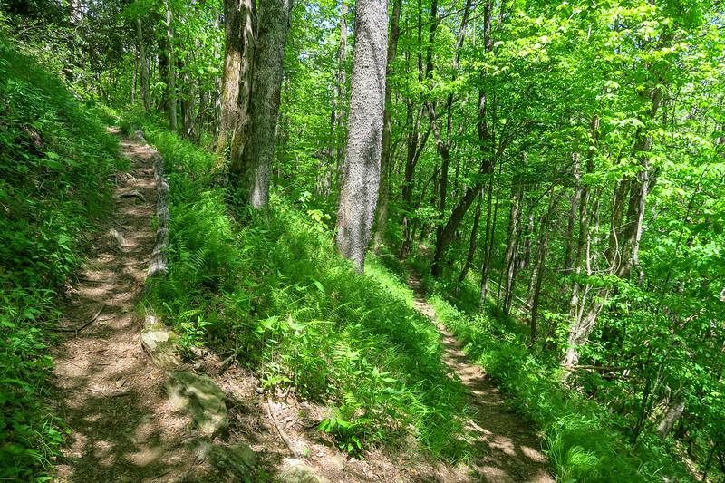 Mountains-to-Sea Trail -- 4,550'