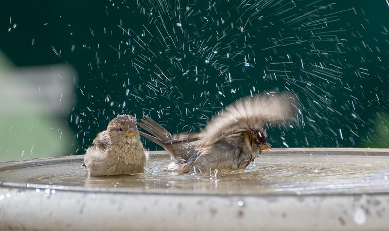 PG_Bird-Bath_GambleJ.jpg
