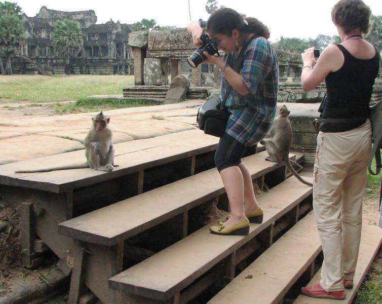 Tourists with monkeys