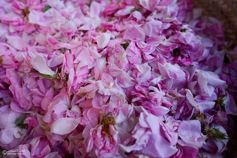 Roses Water (10)-Aljabal Alakhdhar-Oman.jpg